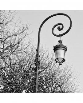 Entre galhos secos (p&b) | Paris - França (PFH)
